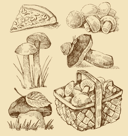 morel: mushrooms set