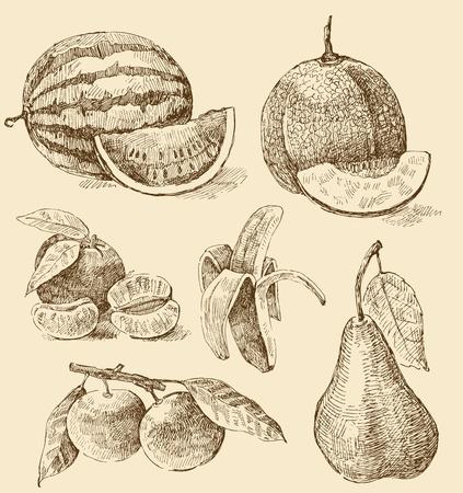 tangerine: fruit collection Illustration