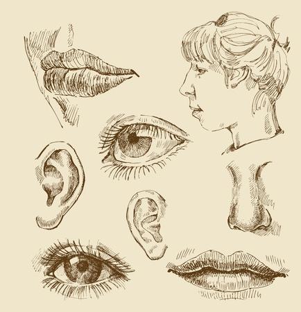 bocetos de personas: colecci�n de arte