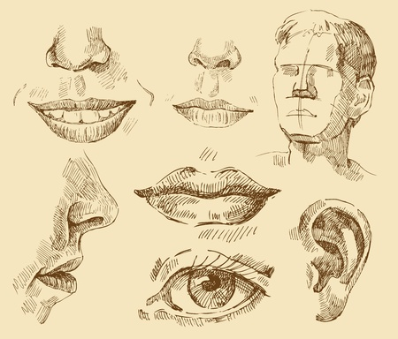 noses: art collection Illustration