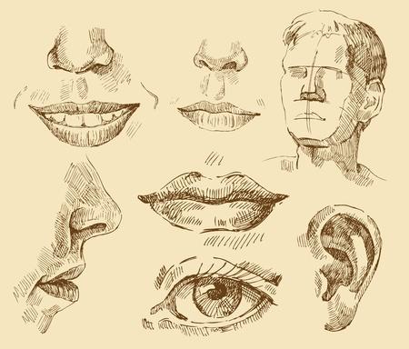 colección de arte Ilustración de vector