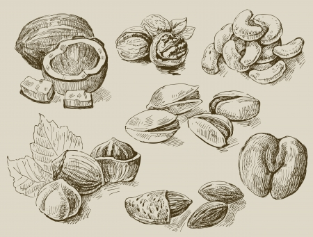 walnut: set of nuts