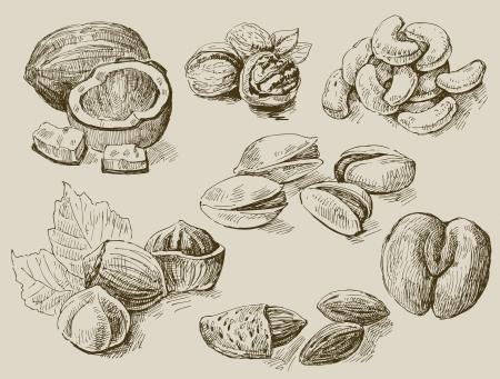 avellanas: un conjunto de frutos secos