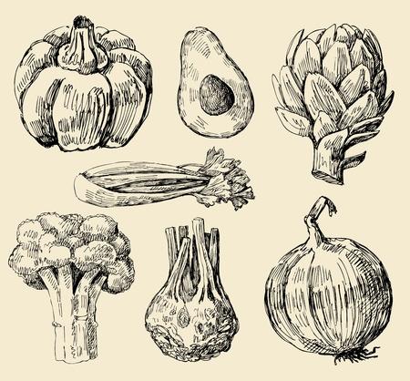 apio: las hortalizas establece Vectores