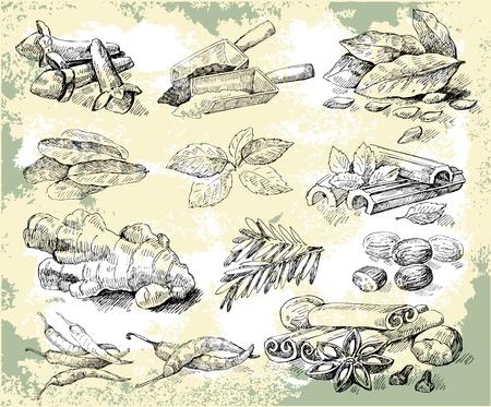 clous de girofle: Herbes �pices Illustration