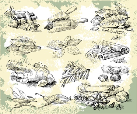allspice: Herbs spices Illustration