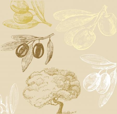 hoja de olivo: Oliva conjunto