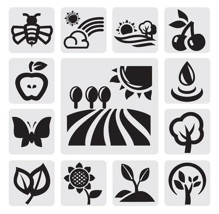 girasol: iconos de la naturaleza