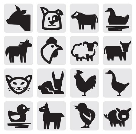 cochinos: animales de granja