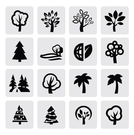 palmeras: �rboles icono