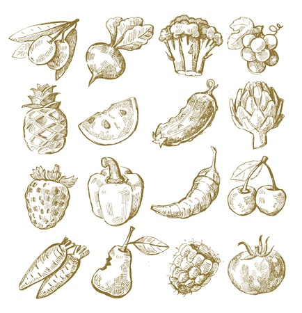 artichoke: hand draw fruit and vegetable Illustration