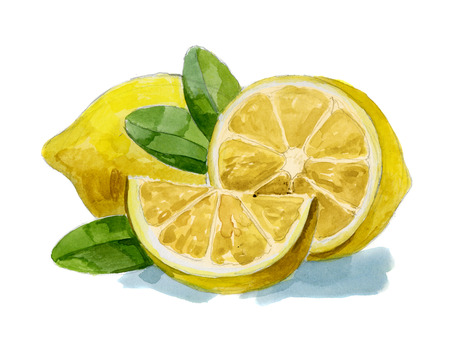 watercolor hand drawn picture of lemon with leafs