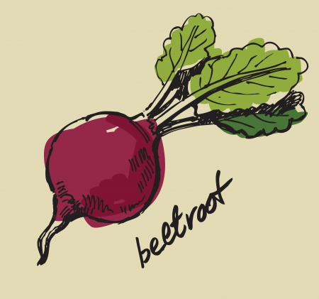 beet: hand drawn fresh color beet on beige