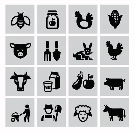 landwirtschaft: Vektor schwarzen Landwirtschaft und Viehzucht Icons