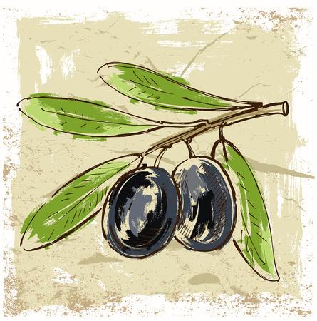 vector hand drawn fresh olive on beige