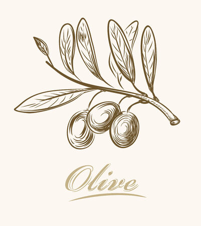 olive tree isolated: vector hand drawn fresh olive on beige