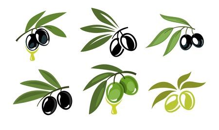 vector green and black olives icons set on white Vector