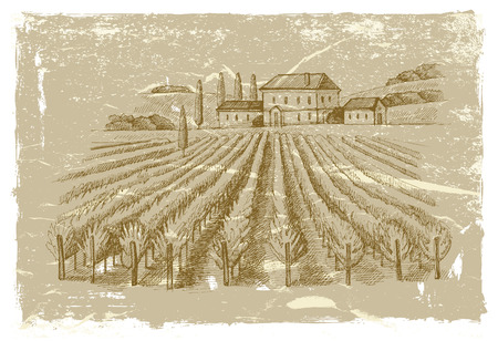 wineyard: hand drawn wineyard Illustration