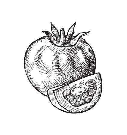 dibujados a mano de tomate