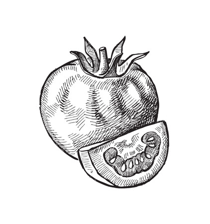 hand getekende van tomaat
