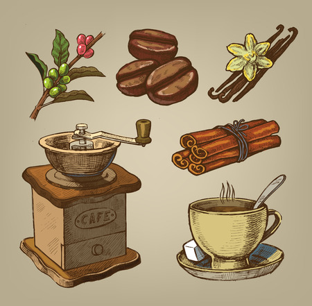 coffee beans: vector color hand drawn picture of coffee theme