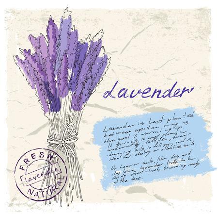 felder: Illustration von Lavendel