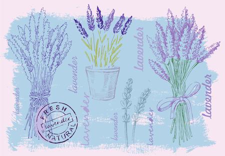 fragrant bouquet: illustration of lavender