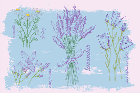 illustration of flower  Vector
