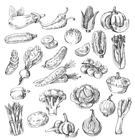sketch: vector set of different hand drawn vegetable