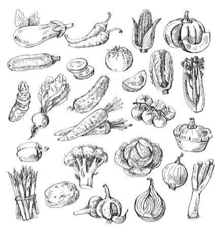 vector set různých rukou nakreslený zeleniny