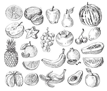 papaya: vector bộ trái cây vẽ tay khác nhau