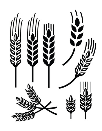 vector black illustration of wheat icon on white