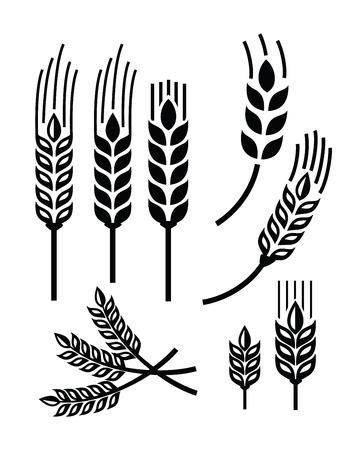 cebada: ilustración vectorial negro del icono del trigo en blanco Vectores