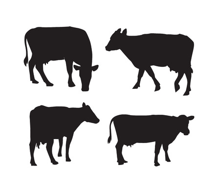 vector black illustration of cow silhouette on white