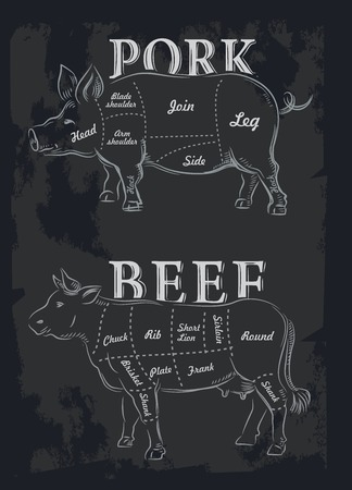 beef cuts: hand drawn meet