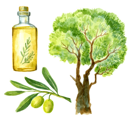 watercolor hand drawn olive Vector