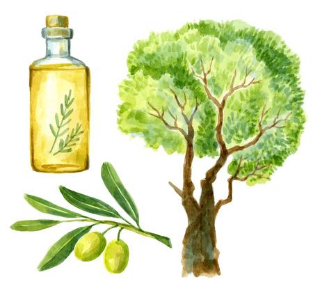 olive oil bottle: watercolor hand drawn olive Illustration