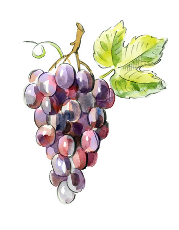 vine and leaves of vine: picture of Red grapes