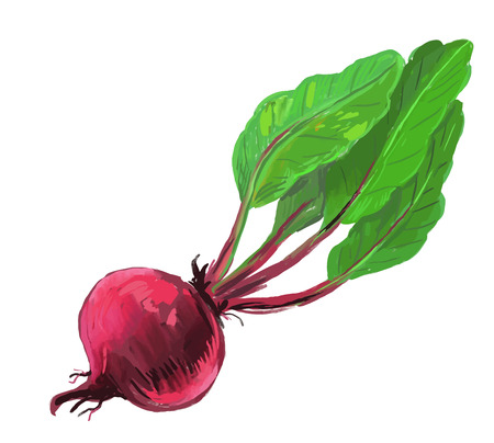picture of red beet Vector