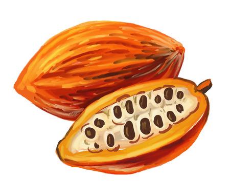 dessin au trait: image du cacao Illustration