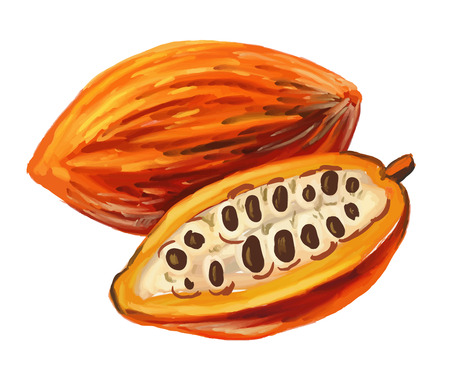 cocoa pod: picture of cacao