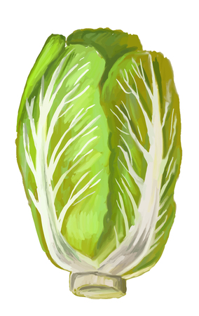 napa: picture of Chinese Cabbage