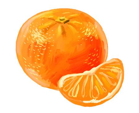 mandarin: picture of mandarin Illustration