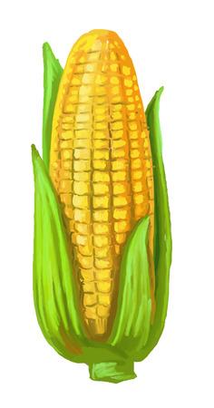 ear corn: foto de ma�z
