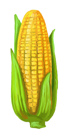 corn: picture of corn