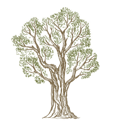 oak wood: vector hand drawn Tree