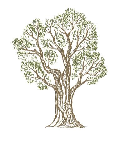 vektor kreslené ručně strom Ilustrace