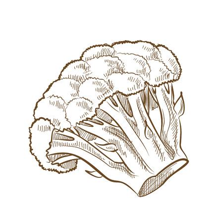 broccoli: picture of broccoli