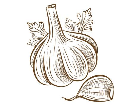 vegetarianism: picture of garlic
