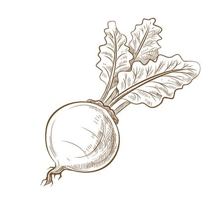 remolacha: imagen de la remolacha con hojas